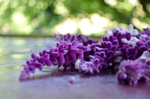 violet_flowers_hires